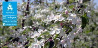 Agrosaveti---Adama---jabuka---cvet-jabuke---pocetna-faza---nimrod---ciprodex---merpan