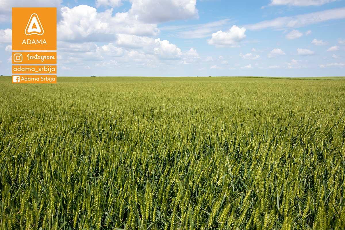 Agrosaveti---Adama---psenica---jecam---regulator-rasta---zastita-bilja-02