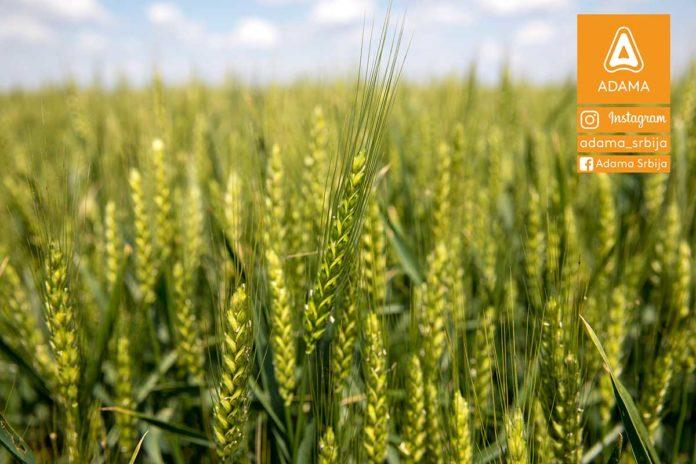 Agrosaveti---Adama---psenica---jecam---regulator-rasta---zastita-bilja-03