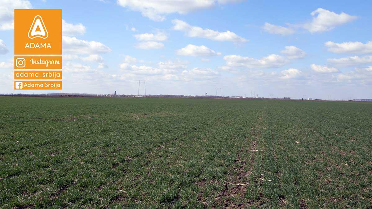 Agrosaveti---Adama---psenica---jecam---regulator-rasta---zastita-bilja