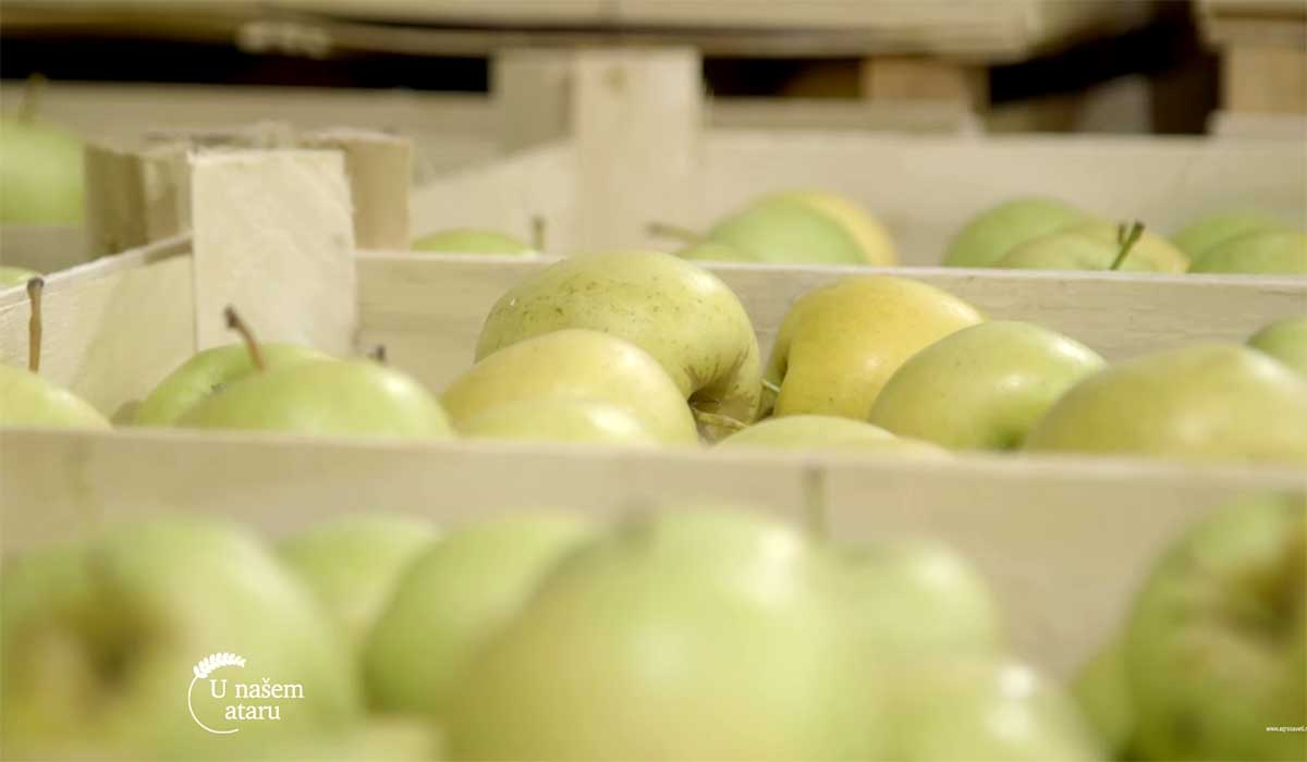 Agrosaveti---Aktuelna-cena-jabuka-u-izvozu---02