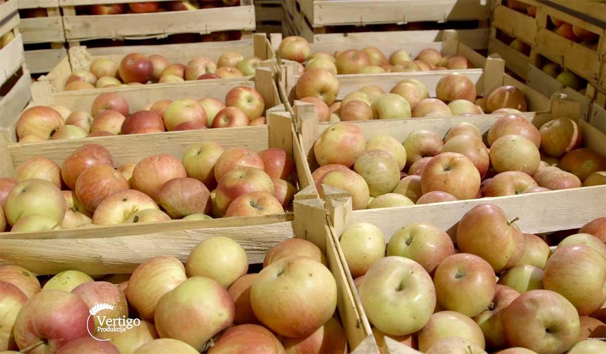 Agrosaveti---Aktuelna-cena-jabuka-u-izvozu---03