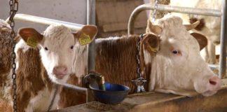 Agrosaveti---Farma-krava-i-proizvodnja-mleka---03