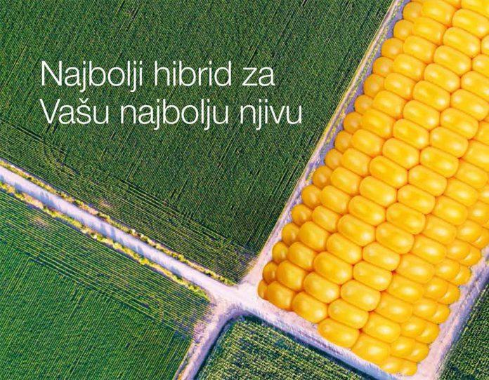 Agrosaveti---KWS - PLUS4GRAIN-01