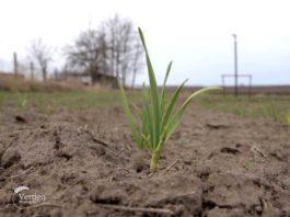 Agrosaveti---Organska-proizvodnja-Mamuzic---01