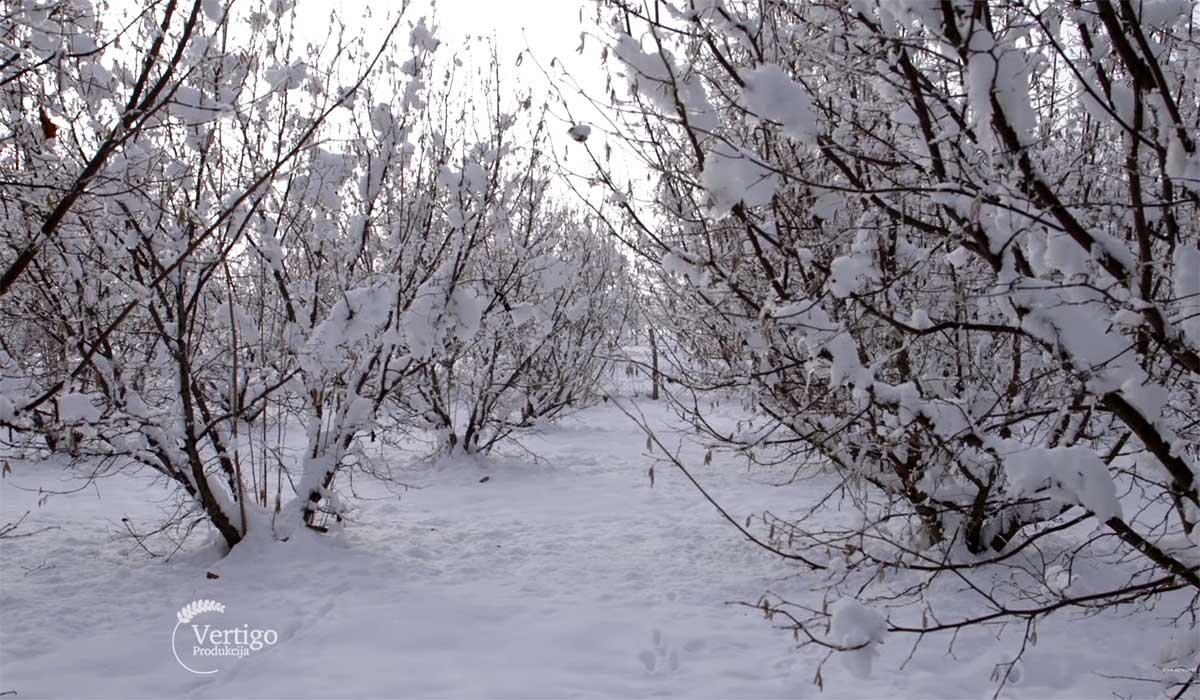 Agrosaveti---Proizvodnja-lesnika---03