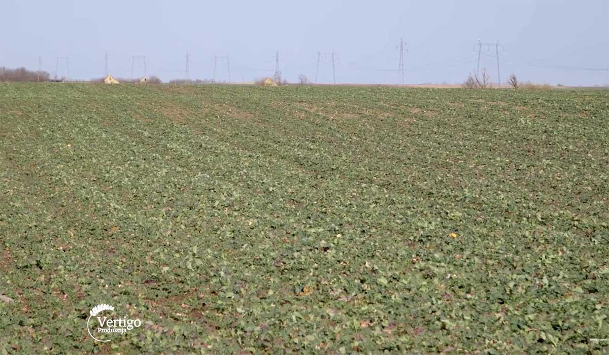 Agrosaveti---Ratarska-proizvodnja-u-Bajmoku---02