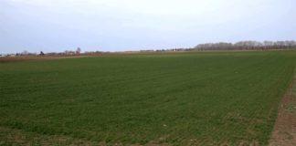 Agrosaveti---Ratarska-proizvodnja-u-Bajmoku---03
