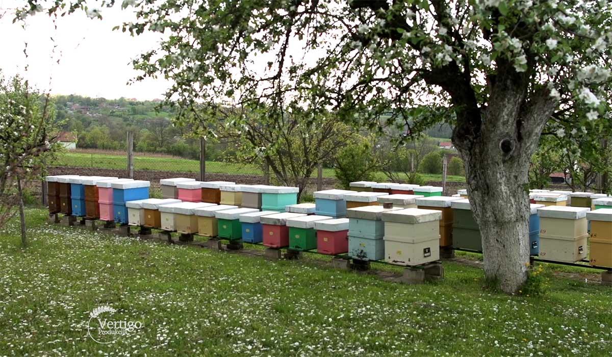 Agrosaveti---Sajam-pcelara-Vojvodine---kosnice---01
