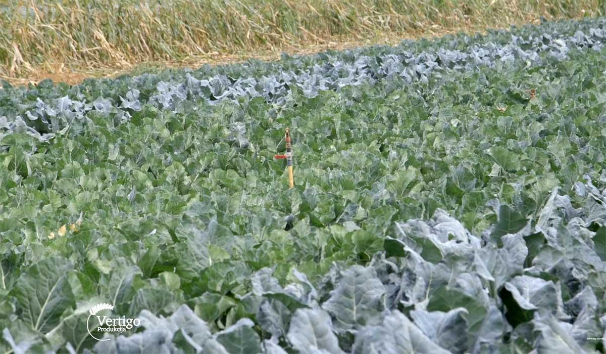 Agrosaveti---Savetovanje-Savremena-proizvodnja-povrca---032