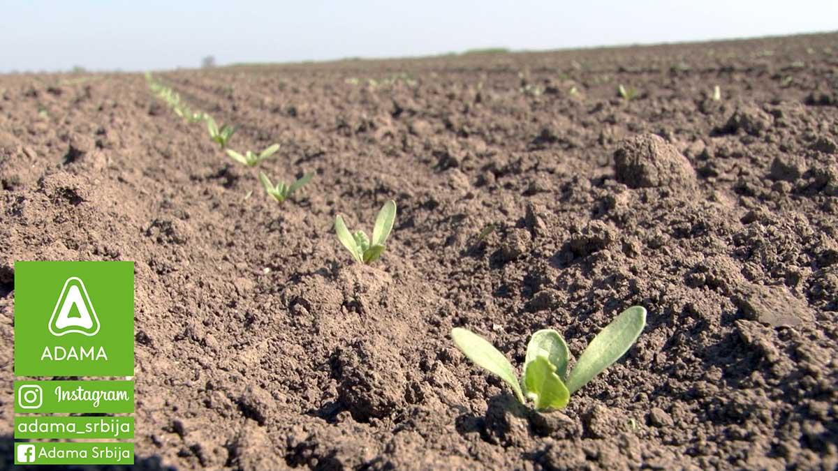 Agrosaveti---Adama---Secerna-repa---Korovi---Goltix-Gold---Cerkospora---prskanje