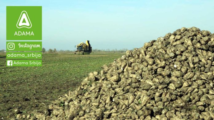Agrosaveti---Adama---Secerna-repa---tehnologija-gajenja---agrotehnika---secer-02