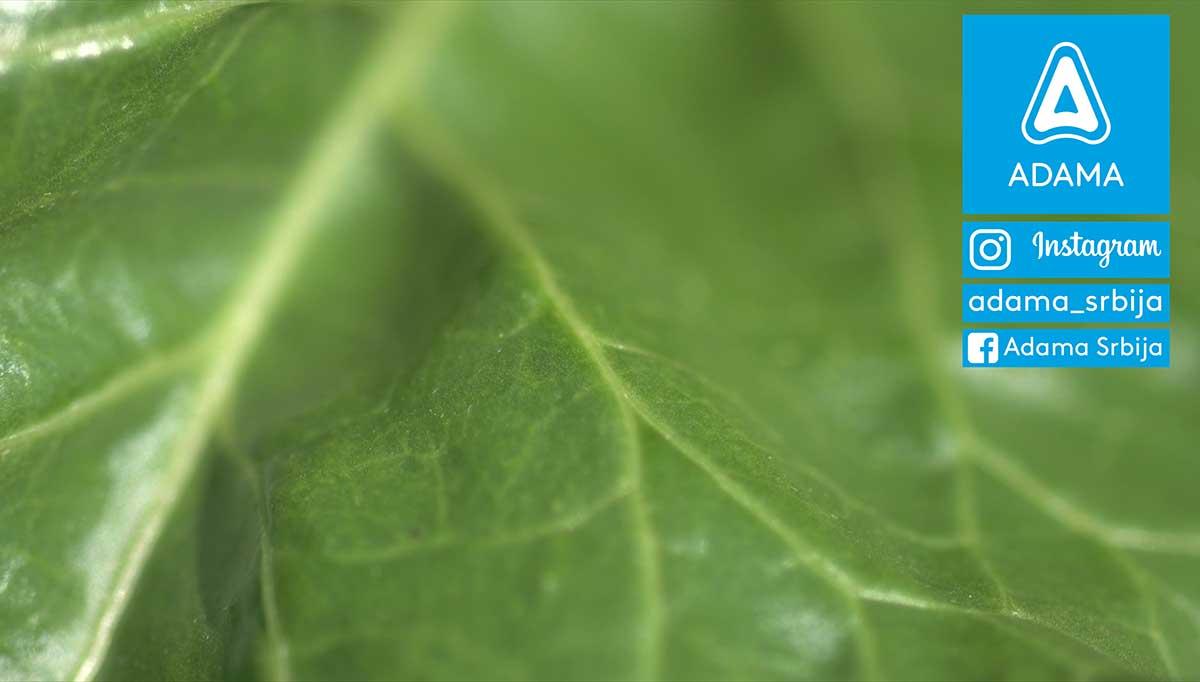 Agrosaveti---Adama---Secerna-repa---tehnologija-gajenja---agrotehnika---secer