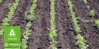 Agrosaveti---Adama---Soja---Proizvodnja---setva---posle-setve-a-pre-nicanja---herbicid---diler---leopard