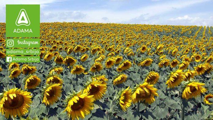 Agrosaveti---Adama---Suncokret---Proizvodnja---Herbicid---Korovi---Prskanje---Saltus-03