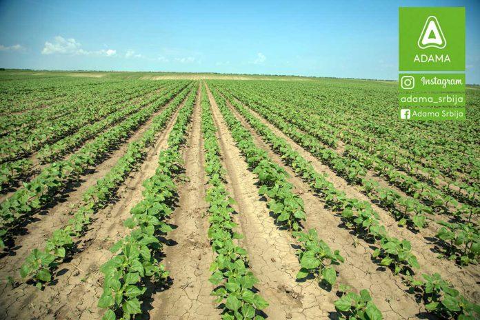 Agrosaveti---Adama---Suncokret---Proizvodnja---Herbicid---Korovi---Prskanje---Saltus---Posle-nicanja-01