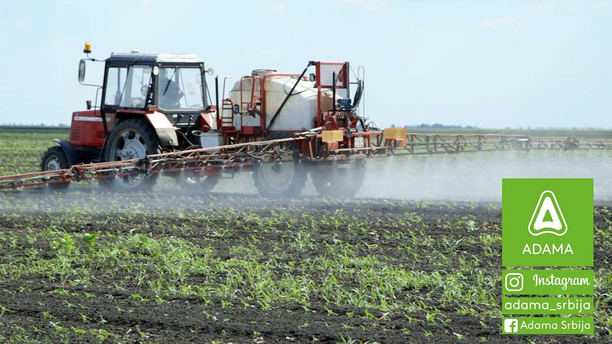 Agrosaveti---Adama---Suncokret---Proizvodnja---Herbicid---Korovi---Prskanje---Saltus
