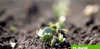 Agrosaveti---BASF---Corum---Dash---soja---herbicid---korovi-03