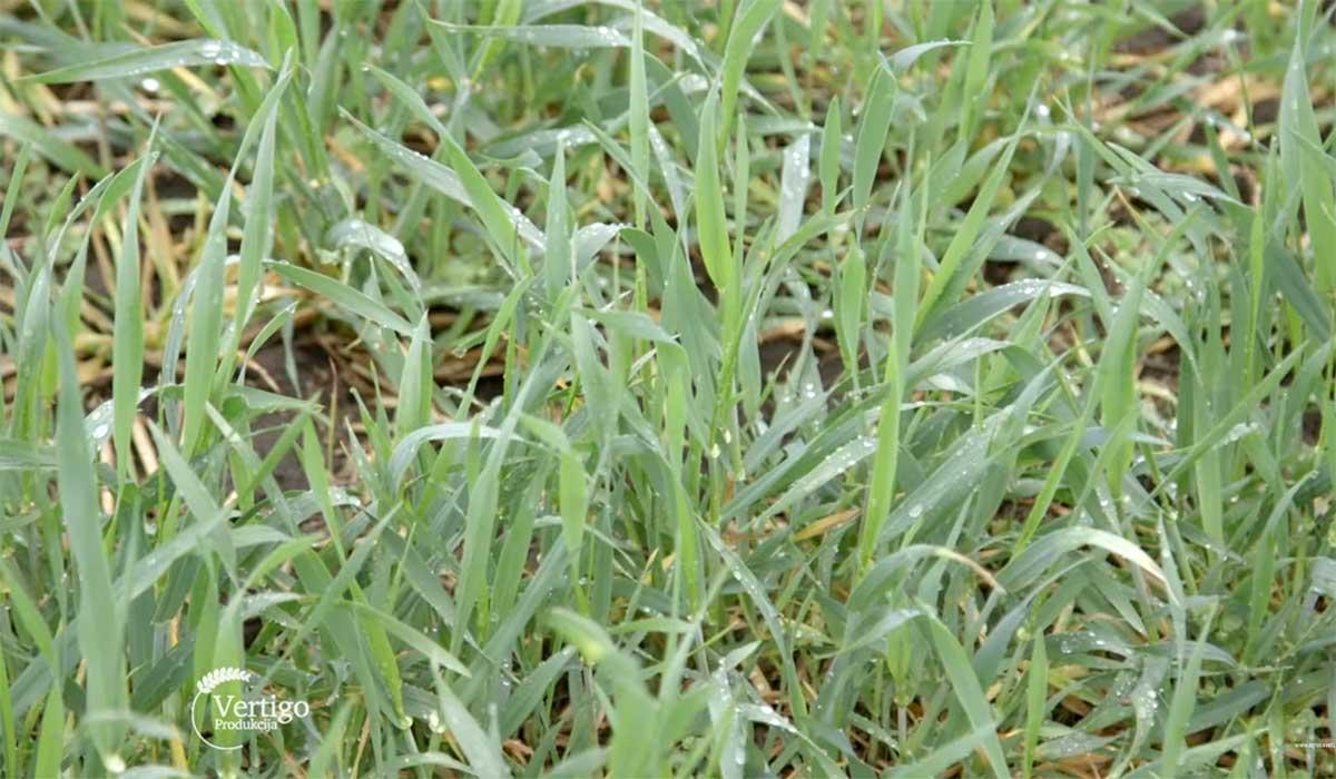 Agrosaveti---Ratarska-proizvodnja-Surduk---02