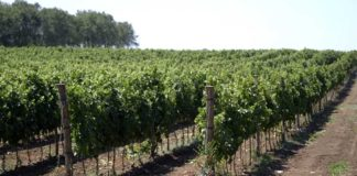 Agrosaveti---Vinarija-Dibonis---02
