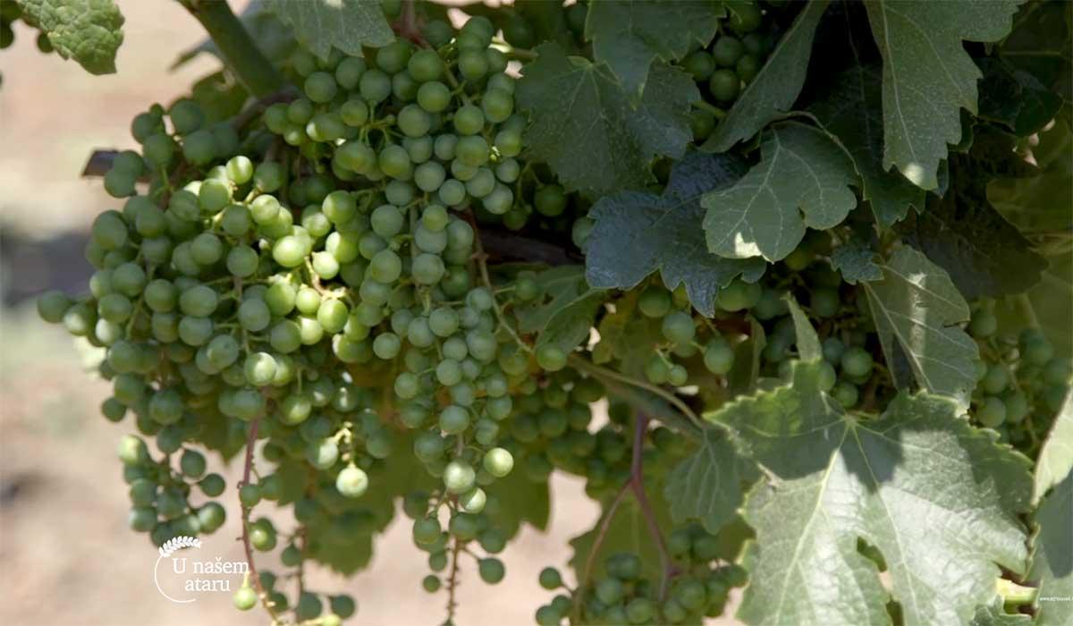 Agrosaveti---Vinarija-Dibonis---03