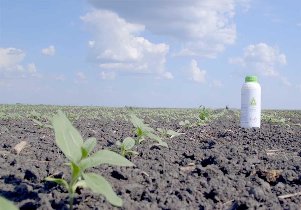 Agrosaveti---Adama---Saltus---suncokret---02