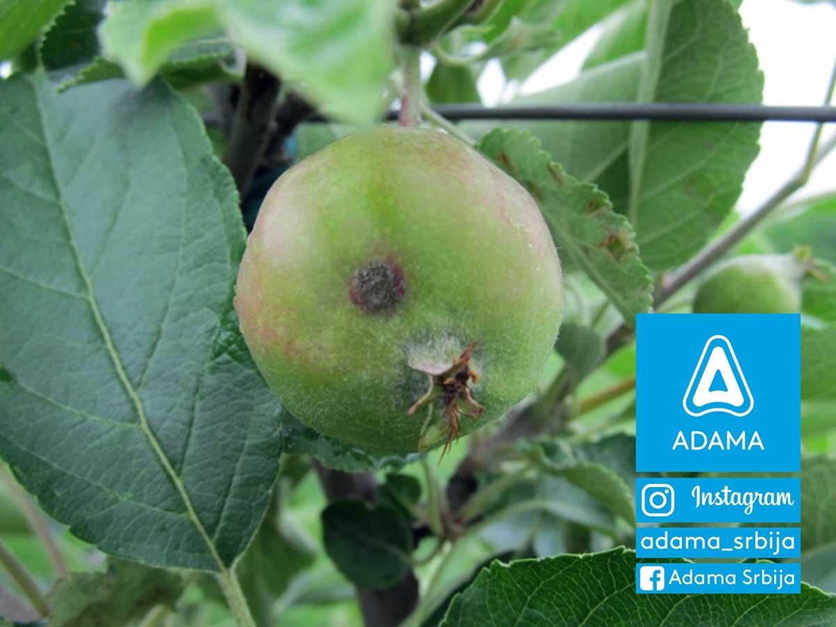 Agrosaveti---Adama---jabuka---cadjava-pegavost---krastavost-jabuke---zastita-jabuke---bolesti-jabuke-01