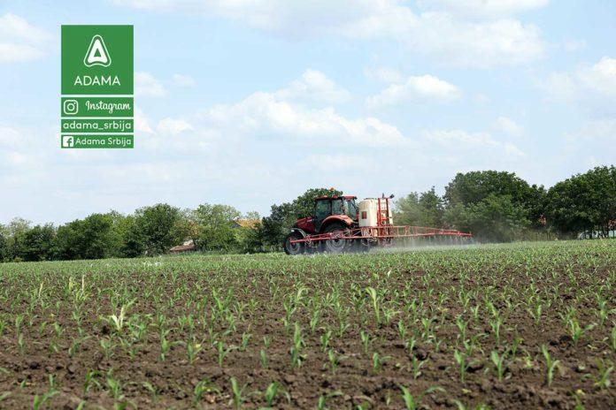 Agrosaveti---Adama---kukuruz---korovi---Chief---Nicogan---Prskanje-kukuruza