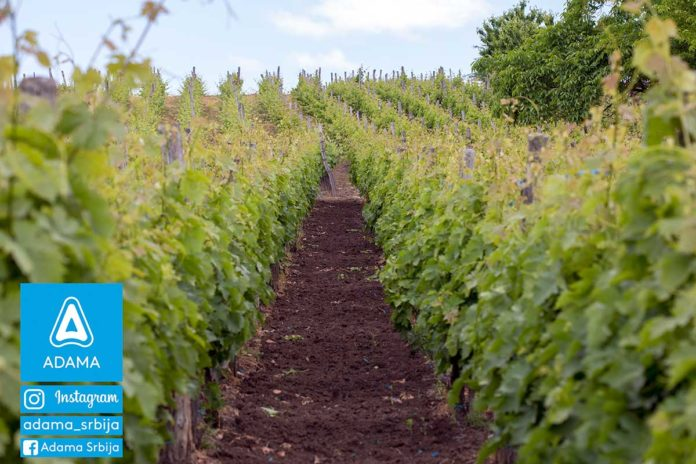 Agrosaveti---Adama---vinova-loza---Linus---grozdje---prskanje---maj