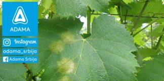Agrosaveti---Adama---vinova-loza---plamenjaca--Linus---Shavit