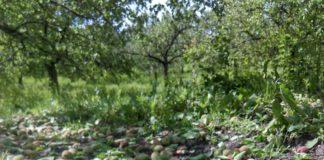 Agrosaveti---Grad-unistio-vocnjake---02