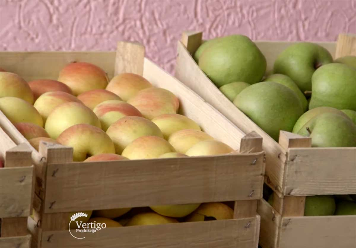 Agrosaveti---Proizvodnja-jabuka-u-Surduku---03
