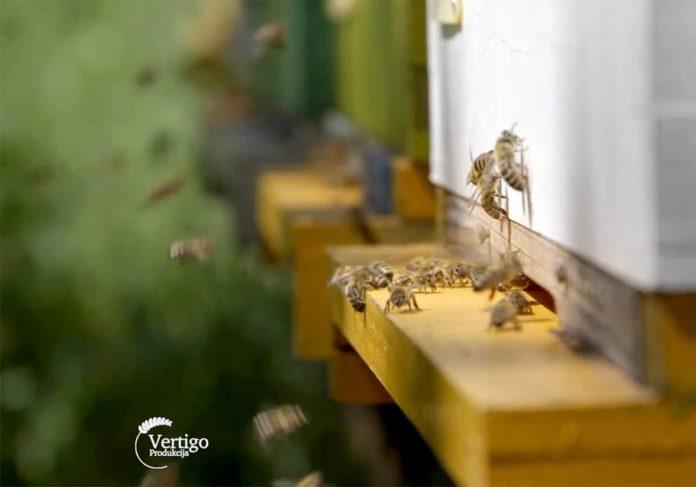 Agrosaveti---Proizvodnja-meda-u-Macvi---02