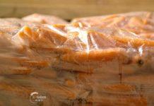 Agrosaveti---Proizvodnja-sargarepa---Begec---01