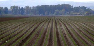 Agrosaveti---Proizvodnja-sargarepa---Begec---02