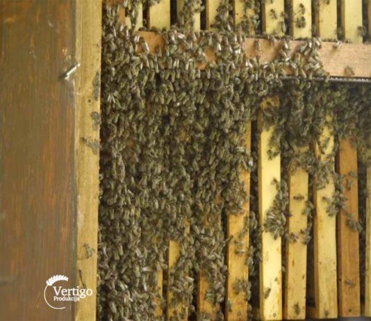Agrosaveti---uzgoj-pcela-i-proizvodnja-meda---Bezdan---01