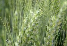Agrosaveti---Adama---Dan-polja---01