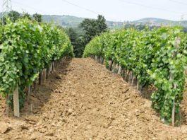 Agrosaveti---Adama---Tretiranje-protiv-sive-trulezi---Vinova-loza--Linus----01