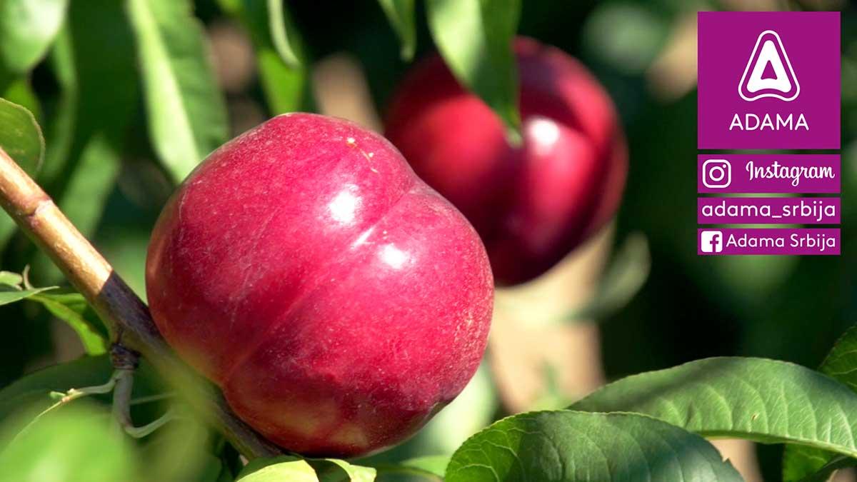 Agrosaveti---Adama---nektarina---breskva---insekti---insekticid---Pyrinex---kosticavo-voce