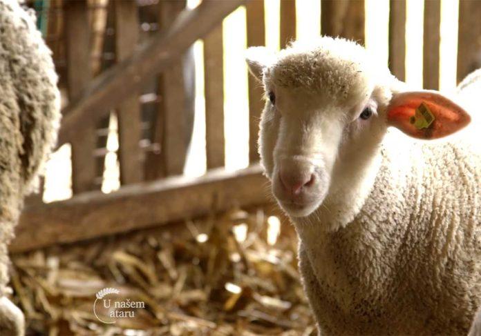 Agrosaveti---Udruzenje-mladih-poljoprivrednika-Srbije---03
