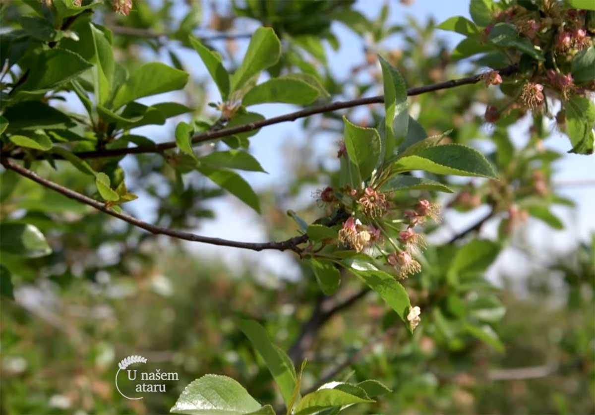 Agrosaveti---proizvodnja-visanja---prerada---Lipovac---01