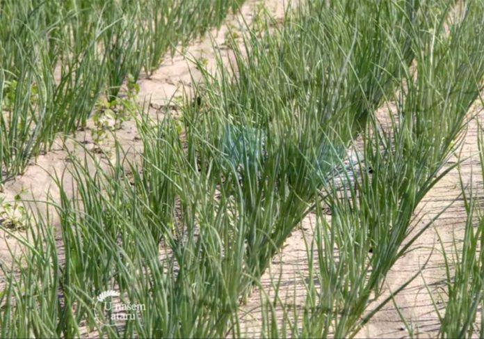 Agrosaveti---Carska-basta---Muzlja---01