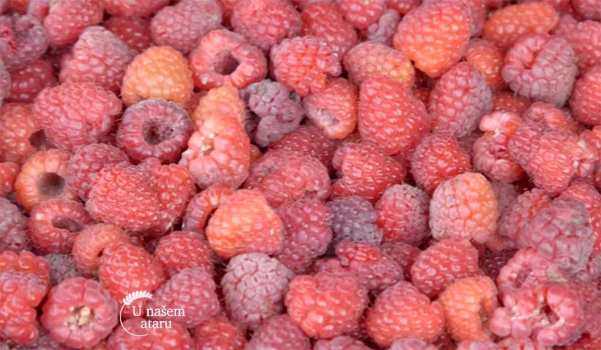 Agrosaveti---Proizvodnja-malina---Lucani---03