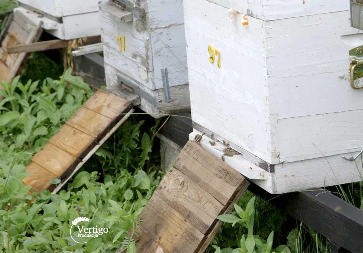 Agrosaveti---Uzgoj-pcela---proizvodnja-meda---Barajevo---01