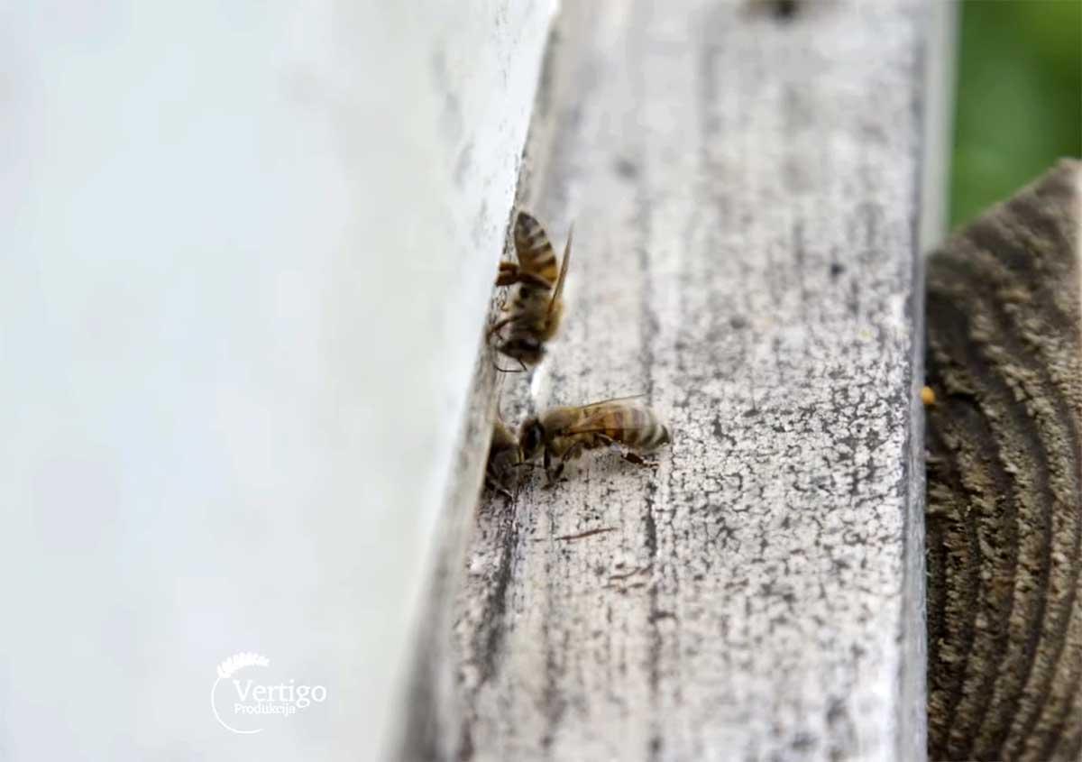 Agrosaveti---Uzgoj-pcela---proizvodnja-meda---Barajevo---02