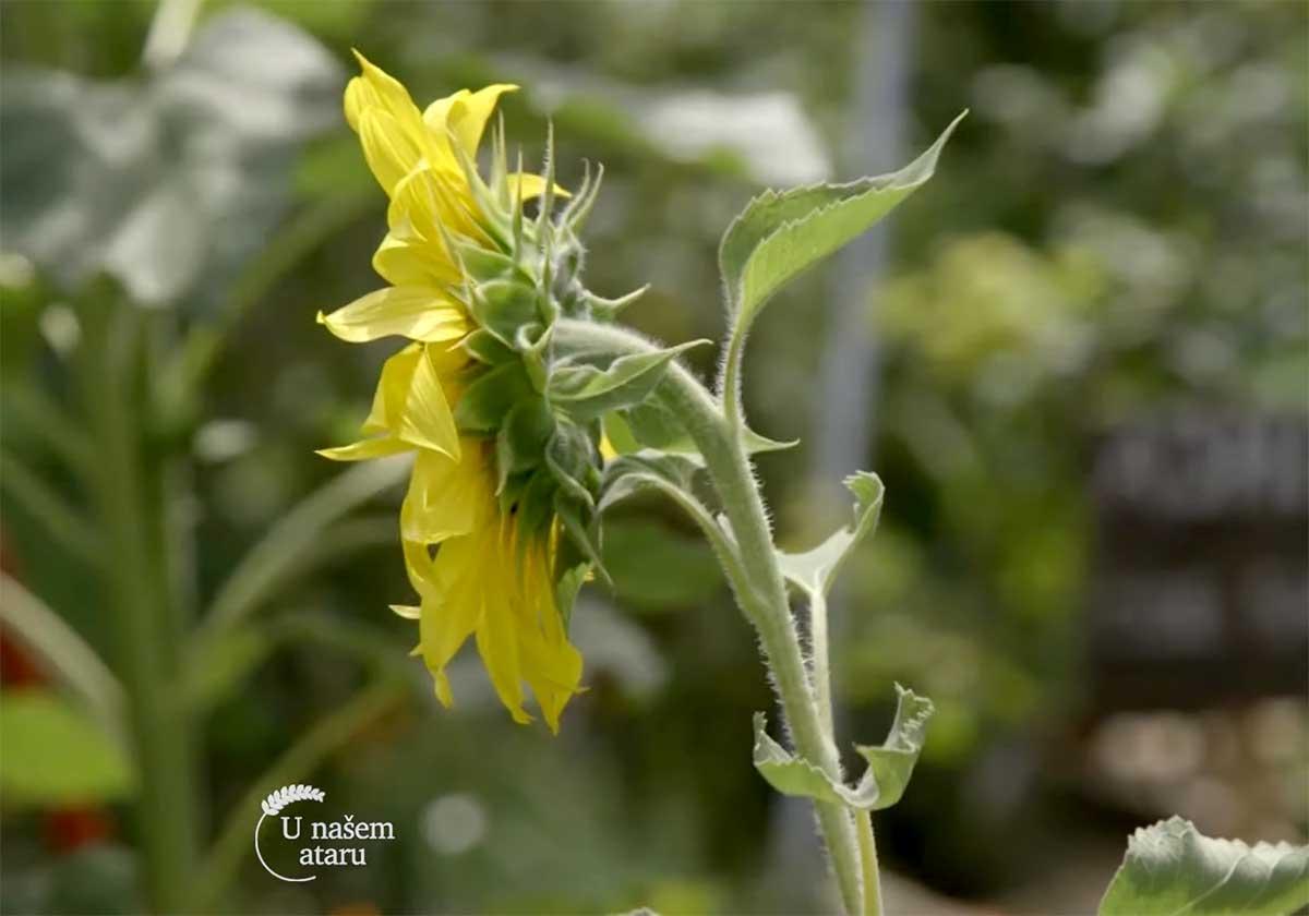 Agrosaveti---Azil-za-biljke---01