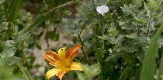 Agrosaveti---Azil-za-biljke---02