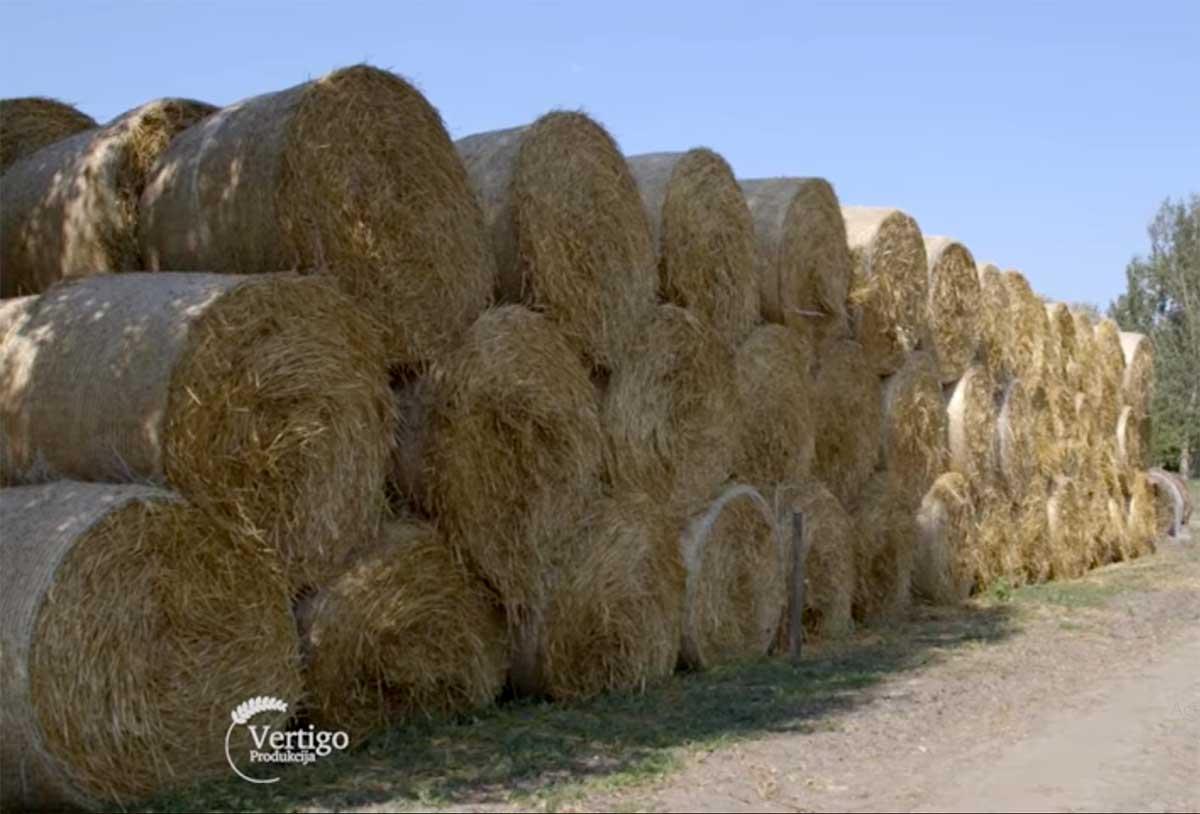 Agrosaveti---Farma-muznih-krava---Budjani---04