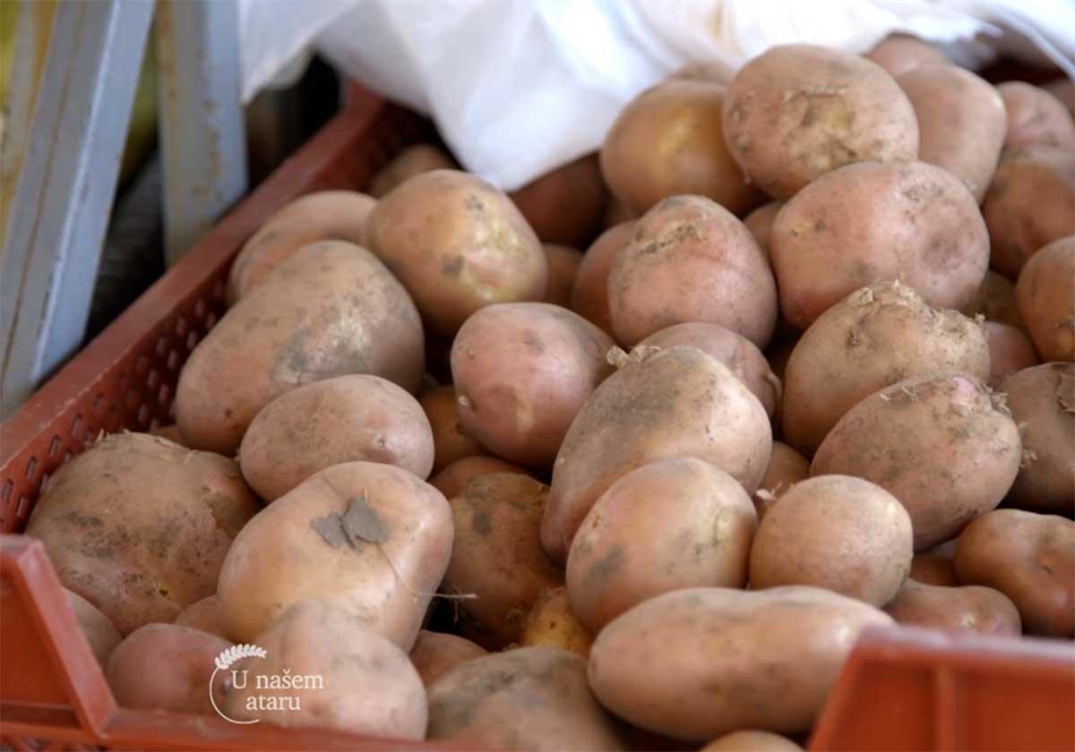 Agrosaveti---Proizvodnja-povrca---Subotica---01