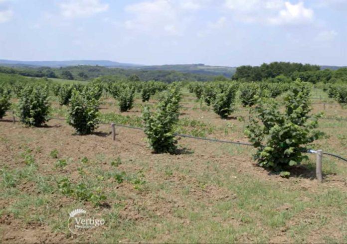 Agrosaveti---Uzgoj-lesnika---02